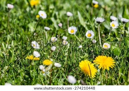 Meadow in springtime in Fislisbach, Aargau, Switzerland #274210448