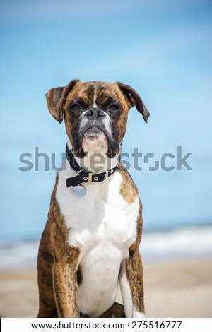 Dog #275516777