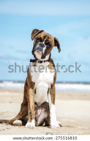 Dog #275516810