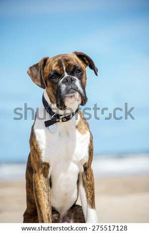 Dog #275517128