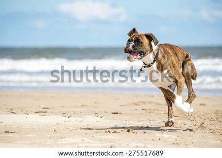 Dog #275517689