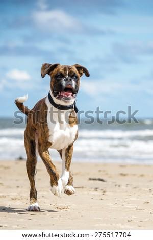 Dog #275517704