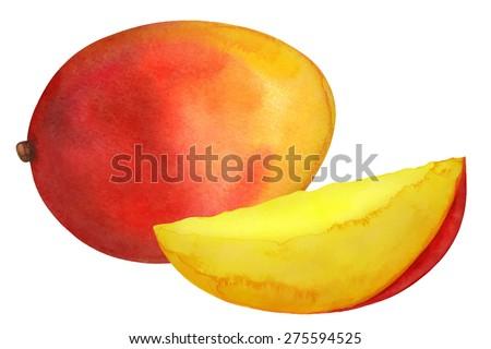Watercolor mango fruit whole and slice closeup isolated on white background #275594525