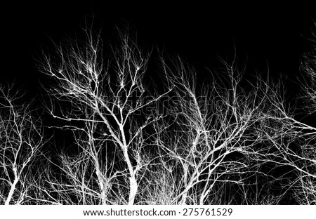 abstraction, white tree branches on a black background