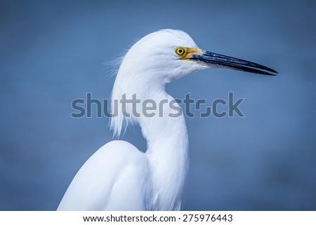Egret on the Beach #275976443