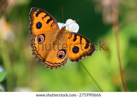 Butterfly on flower #275990666