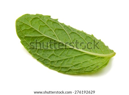 fresh mint leaves isolated on white background #276192629