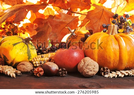 Thanksgiving - different pumpkins with nuts, maize, berries and grain in front of highlighted oak foliage #276205985