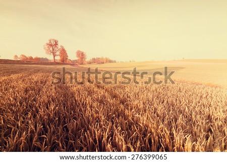 Vintage photo of rural landscape and vignette #276399065
