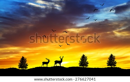 wildlife and nature of colors