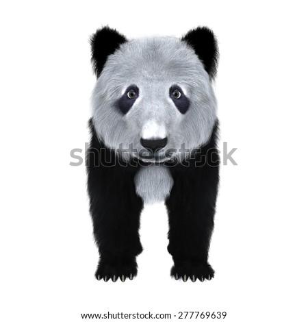 panda #277769639