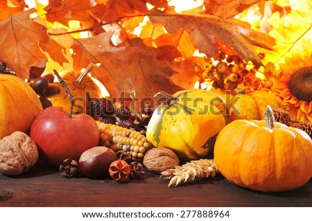 Thanksgiving - different pumpkins with nuts, maize, berries and grain in front of highlighted oak foliage #277888964