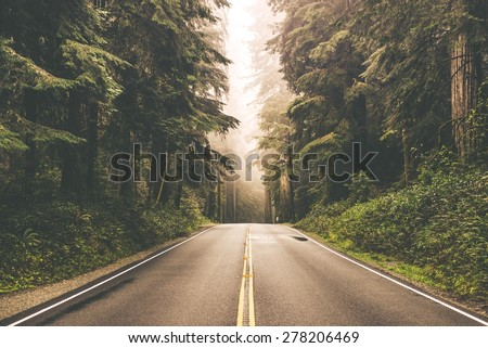 Foggy Straight Redwood Highway in Northern California, United States Royalty-Free Stock Photo #278206469