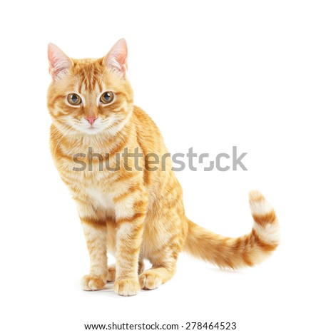 Portrait of red cat isolated on white #278464523
