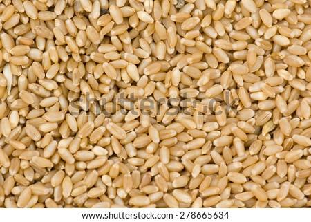 Wheat seed closeup Salunkwadi; Ambajogai; Beed; Maharashtra; India #278665634