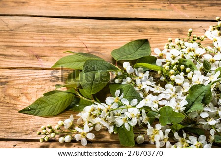 Bird cherry blossoms isolated on wood, nature backgrounds #278703770