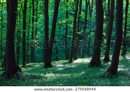 beautiful green forest with sunlight #279048944