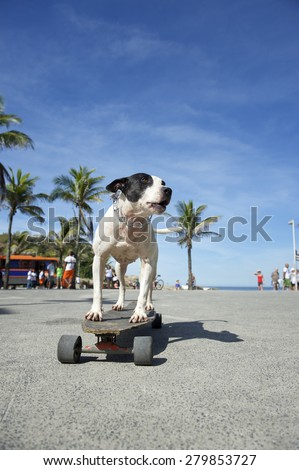 Brazilian dog riding skateboard under the palm trees at Arpoador Ipanema Beach Rio de Janeiro Brazil #279853727