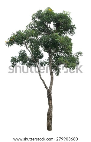 Tree isolated on white background   #279903680