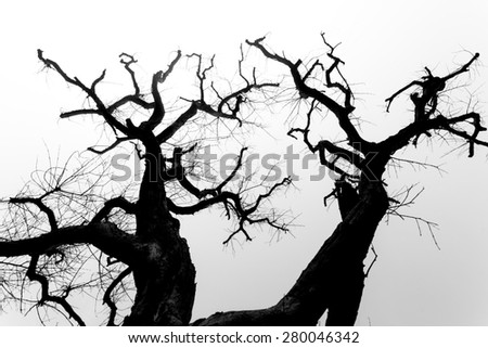 Black and white tree branch #280046342