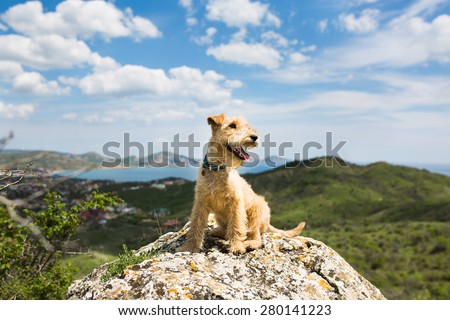 Happy dog breed lakeland terrier is sitting on a large rock on a background of mountains, sea and blue sky #280141223