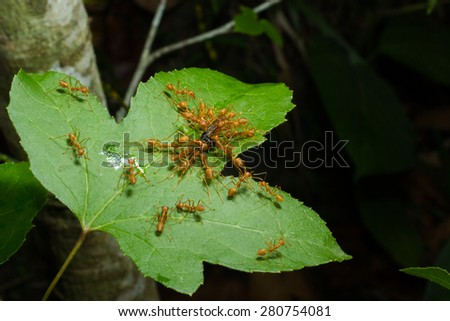 Ants, ants are fighting to dislodge the food. #280754081