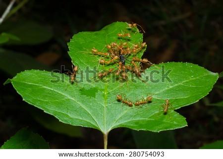 Diligent ants find find thri nestin,ants,Diligent,nesting,food. #280754093