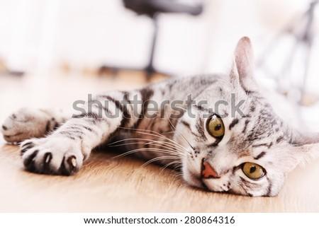 Beautiful cat lying on floor close-up #280864316