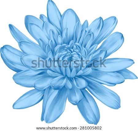 Beautiful blue chrysanthemum flower isolated on white background. Vector illustration #281005802