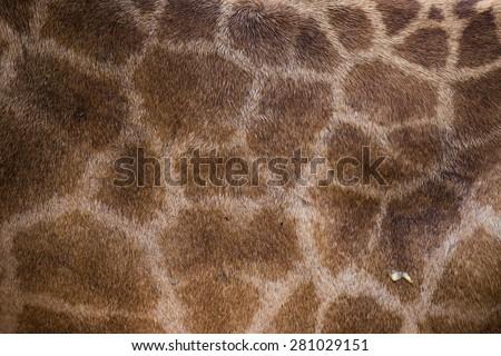 Giraffe patterned background