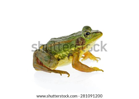 Frog isolated on a white background  #281091200