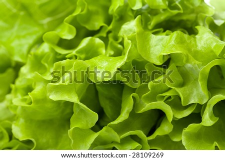 fresh lettuce background #28109269