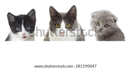cat looking #281190047