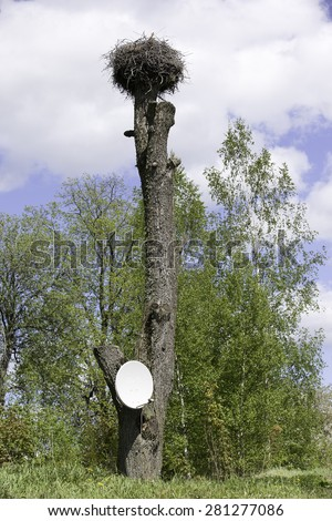Satellite dish on tree with white stork nest. #281277086