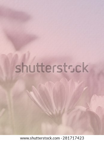 Purple daisy in pastel tone with paper texture for the soft background #281717423