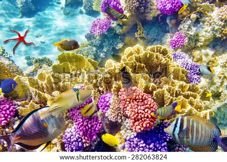 Wonderful and beautiful underwater world with corals and tropical fish. #282063824