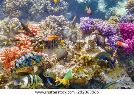 Wonderful and beautiful underwater world with corals and tropical fish. #282063866