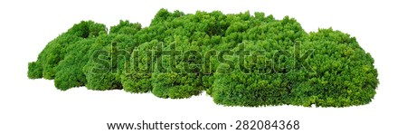 Shrubs trimmed into round shape Royalty-Free Stock Photo #282084368