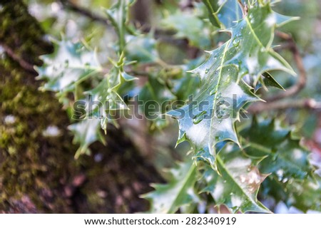 Closeup of water drop on sharp and edgy green leaf on tree in forest along hiking trail up the mountain of Mont-Sal�¨ve, near Geneva, Switzerland. 2015. #282340919