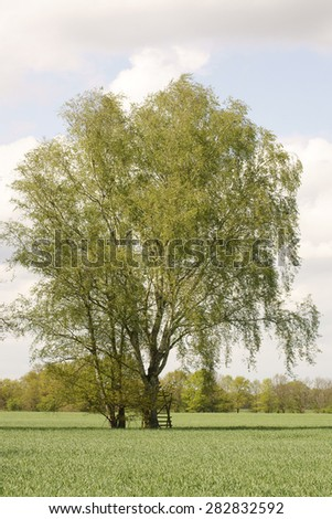 The photograph of a single birch tree with a high seat in the midst of a field / High seat at the birch                      #282832592
