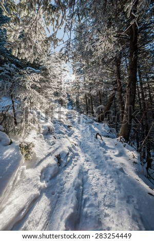 Majestic winter landscape with trees in snow #283254449
