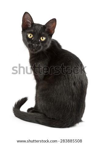 black cat looks around