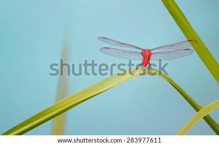 Dragonfly #283977611