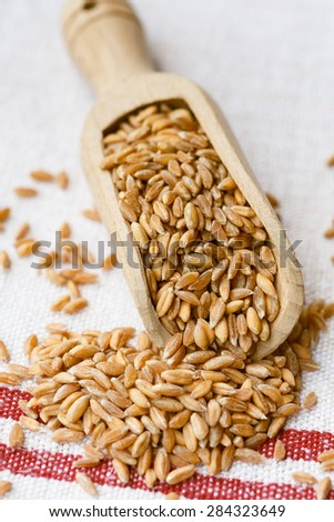 Spelt grains on a wooden scoop #284323649