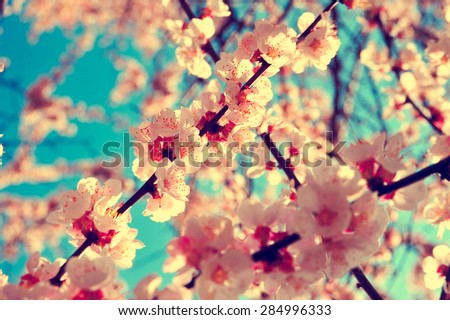 Apricot tree branch with flowers. Blooming tree branch with pink flowers. Floral flowers modern nature background with vintage and retro branch tree with beautiful flowers. Vintage flowers background. #284996333