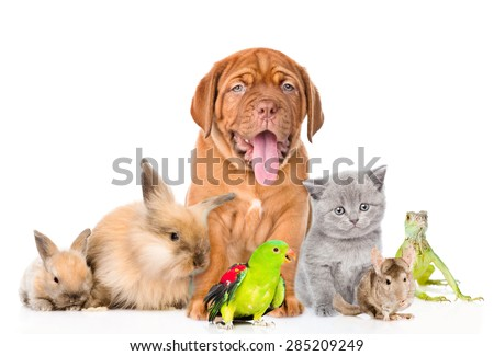 Group of pets together in front view. isolated on white background #285209249