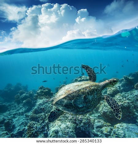 Sea turtle loggerhead floating over corals in tropical paradise. Cloudscape splitted by waterline #285340133