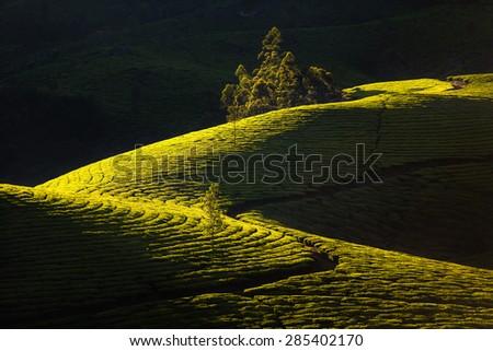 Bright and vivid landscape of green tea plantations in India (Kerala, Munnar). #285402170