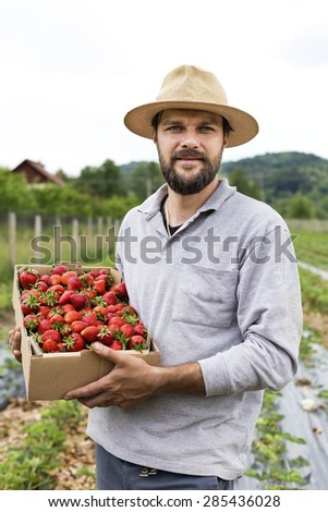 Portrait of young farmer in strawberry field holding a cardboard box full with fresh red strawberries #285436028
