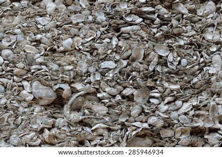 Coquina shell wall background at historic St. Augustine, Florida. #285946934